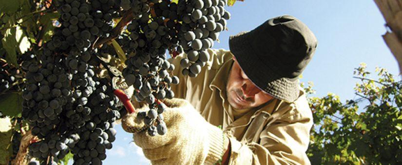 Acuerdo de diversificación vitivinícola entre San Juan y Mendoza